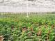 Aphria Acquires Broken Coast Cannabis