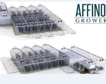 Affinor Growers-2