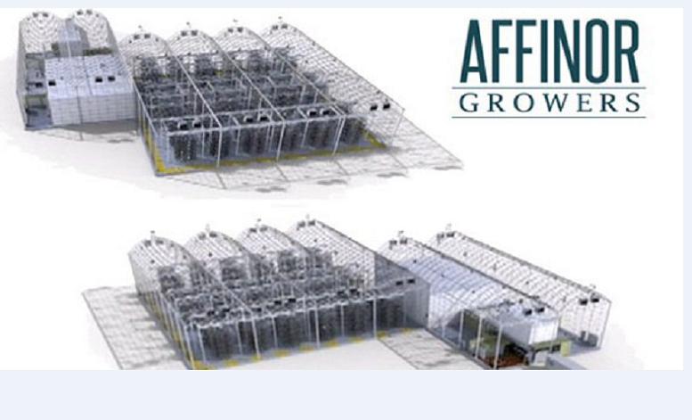 Affinor Growers-2