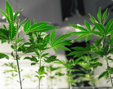 Cannabis Stocks to Watch: Aleafia Health Inc  - Ordinary