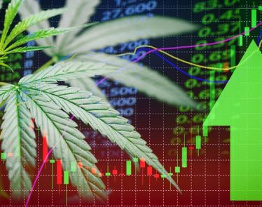 best cannabis stocks 2019