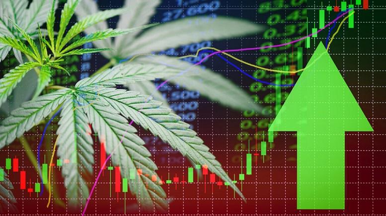 best cannabis stocks 2019