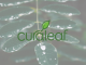 Curaleaf Stock