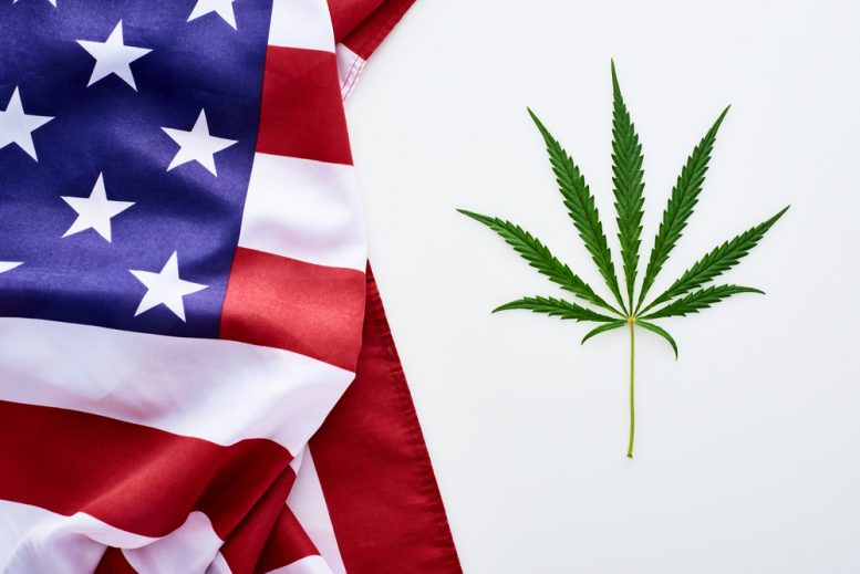 cannabis legal states 2020