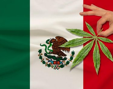 Mexico Cannabis