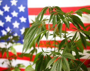 US cannabis market