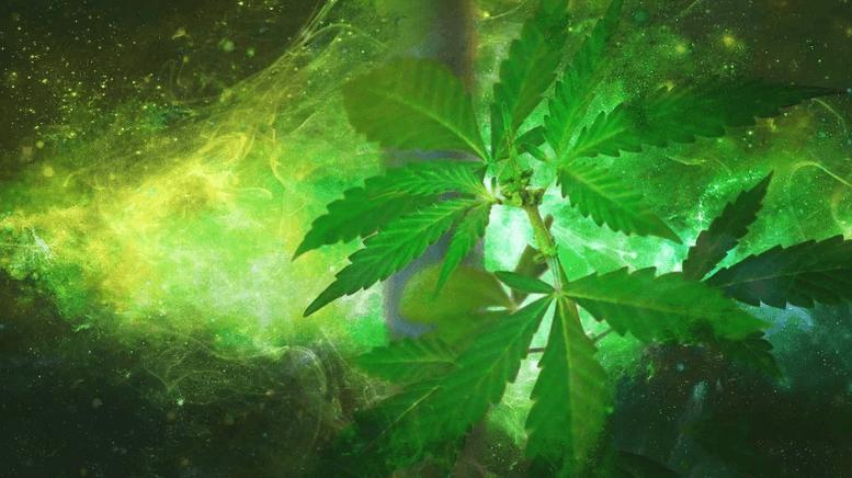 popular cannabis stocks