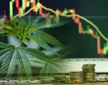 cannabis penny stocks